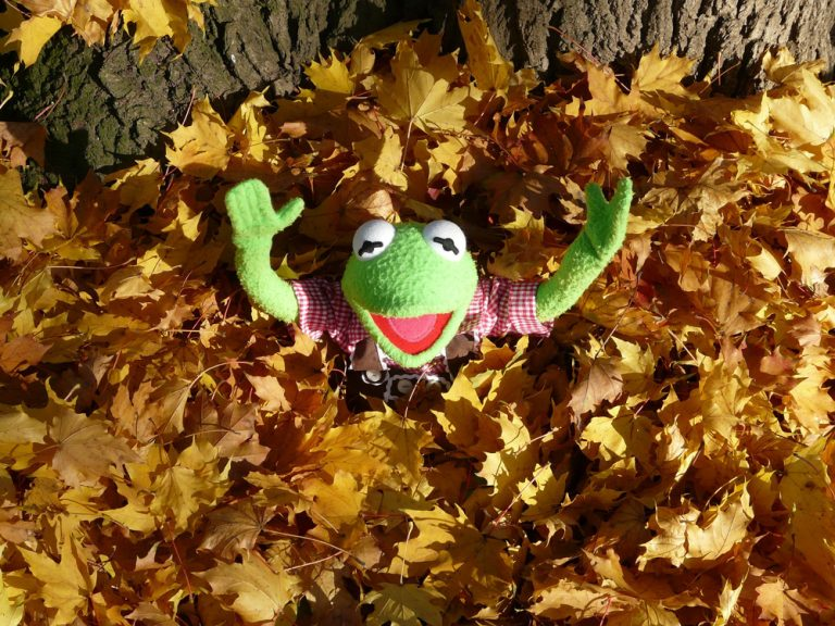 kermit-in-leaves